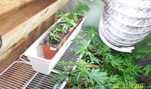 Indoor Grow 2