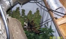 Indoor Grow 3
