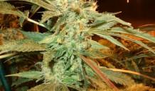 Indoor Grow 4
