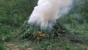 Marijuana Burn
