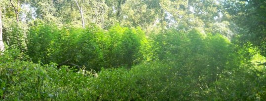 Outdoor Grow 2