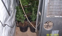 Indoor Grow 5